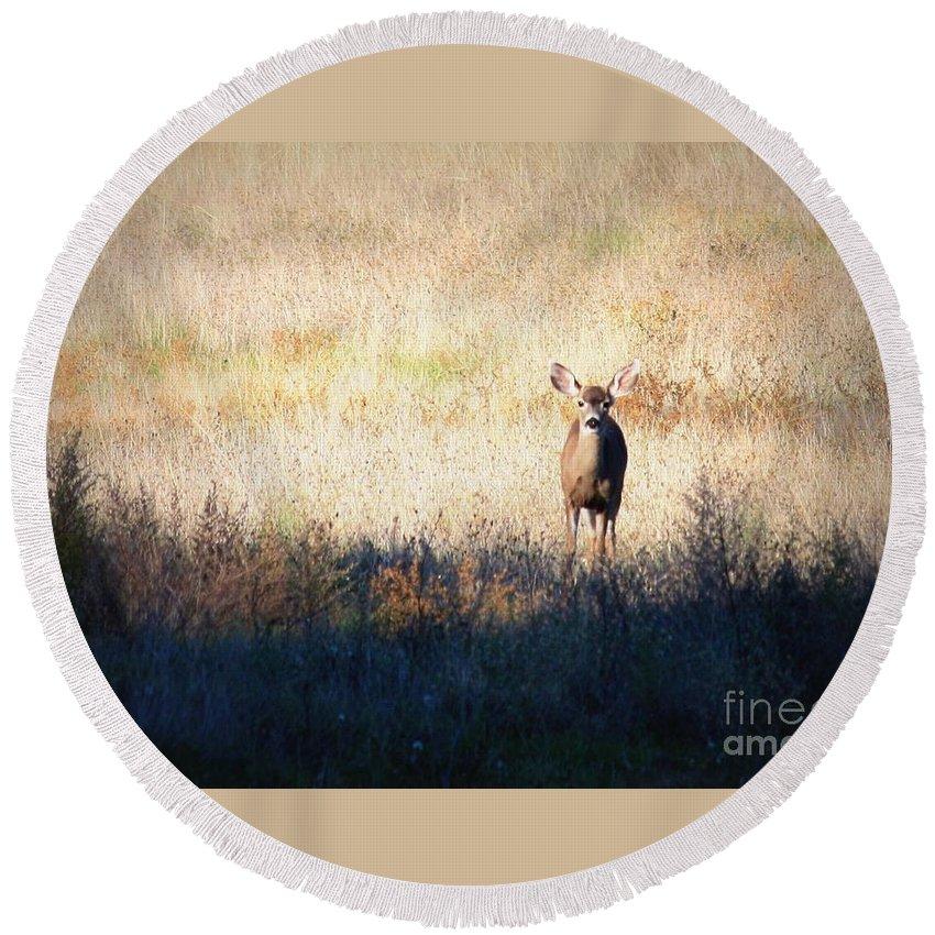 Wildlife Round Beach Towel featuring the photograph One Cute Deer by Carol Groenen