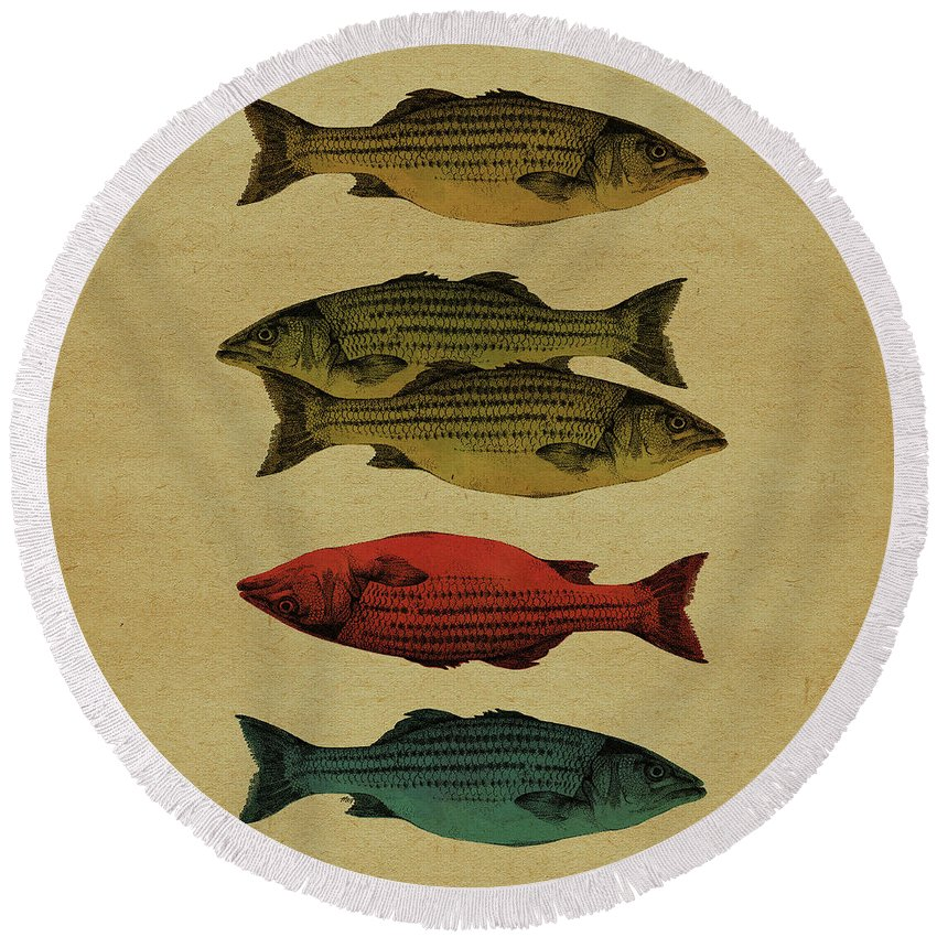 Fish Round Beach Towel featuring the drawing One fish, two fish . . . by Meg Shearer