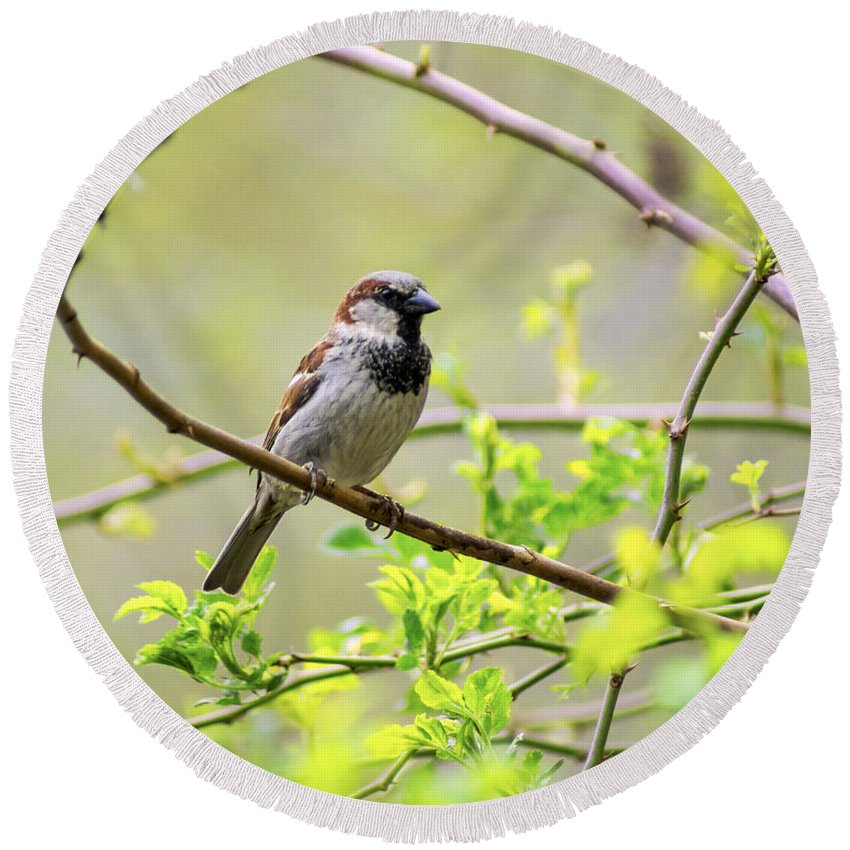 Sparrow Round Beach Towel featuring the photograph One Sparrow by Joe Geraci