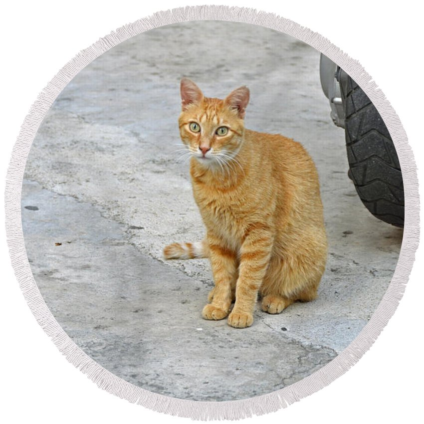 Cat Round Beach Towel featuring the photograph Orange Cat by Elaine Berger