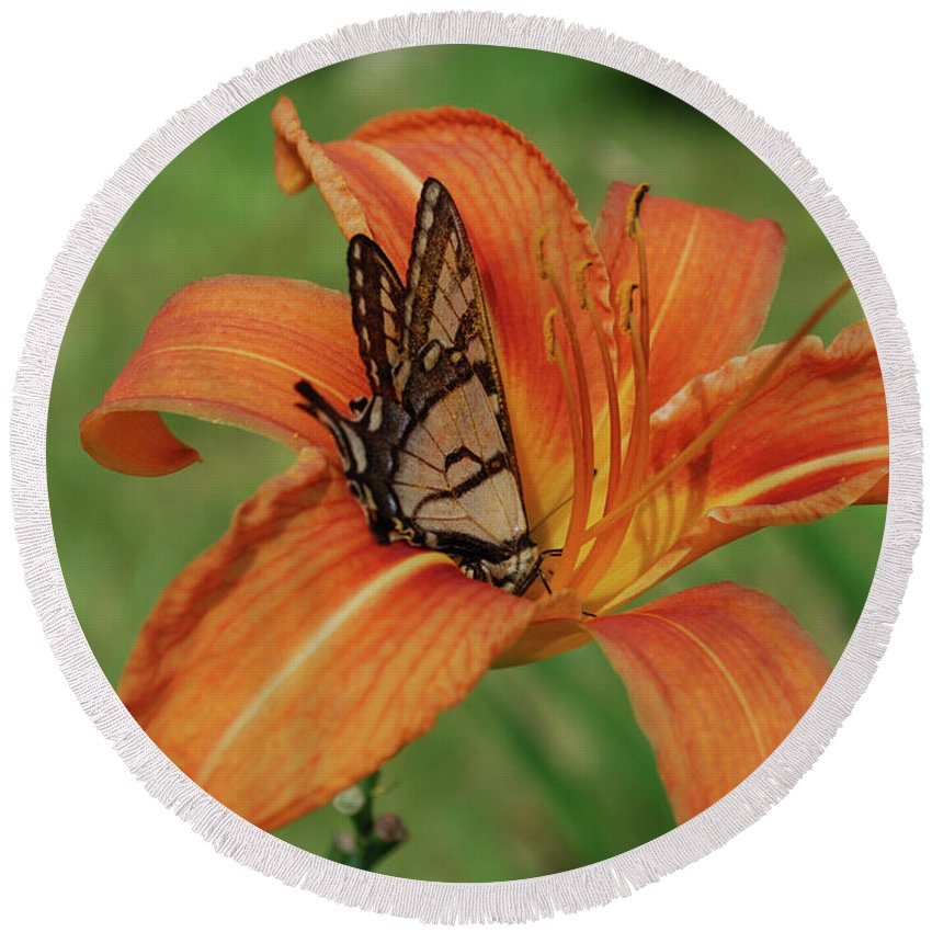 Lily Round Beach Towel featuring the photograph Orange Daylily With A Butterfly On It's Petals by DejaVu Designs
