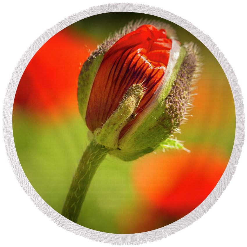 Agriculture Round Beach Towel featuring the photograph Orange Poppy Bud by Teri Virbickis
