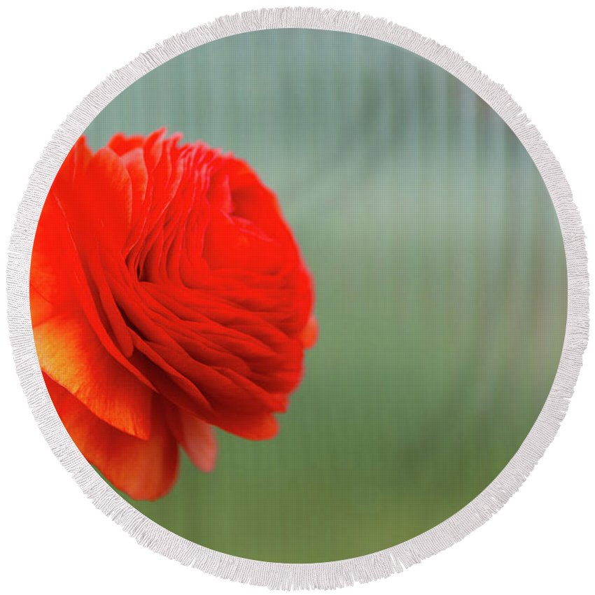 Flowers Round Beach Towel featuring the photograph Orange Ranunculus by Julie Craig
