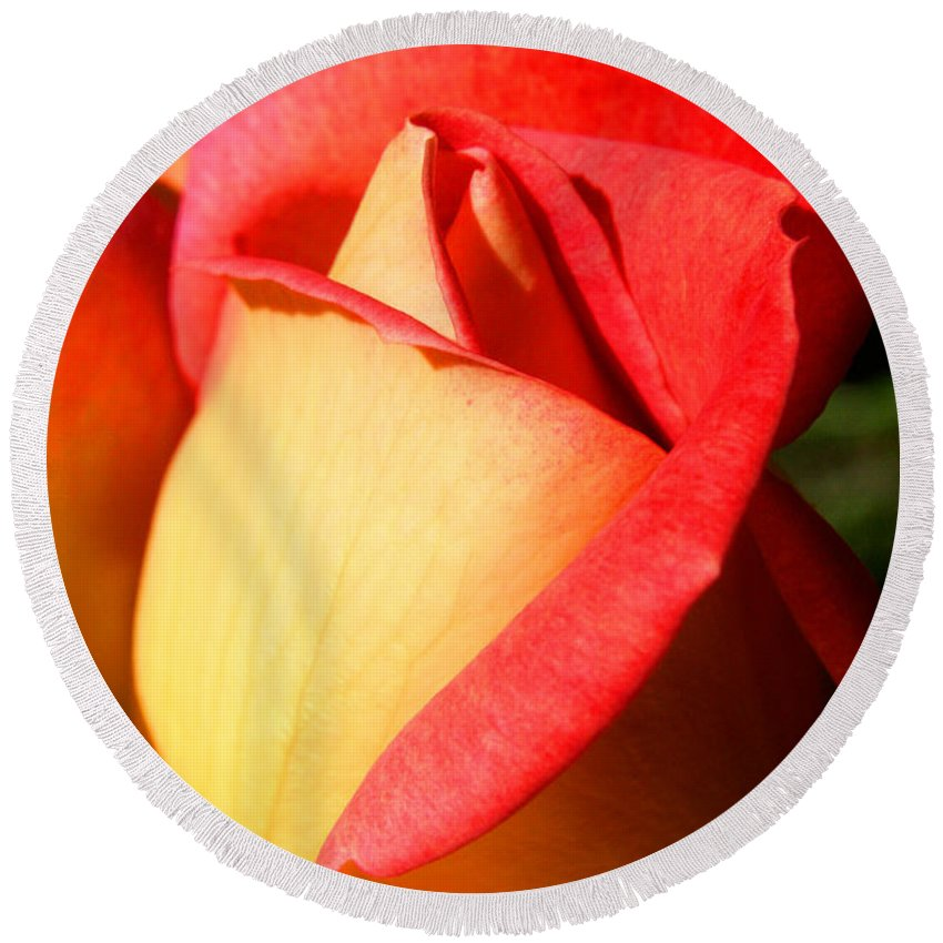Orange Rosebud Round Beach Towel featuring the photograph Orange Rosebud by Ralph A Ledergerber-Photography