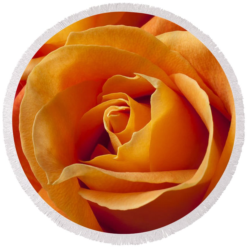 Orange Round Beach Towel featuring the photograph Orange Roses by Garry Gay