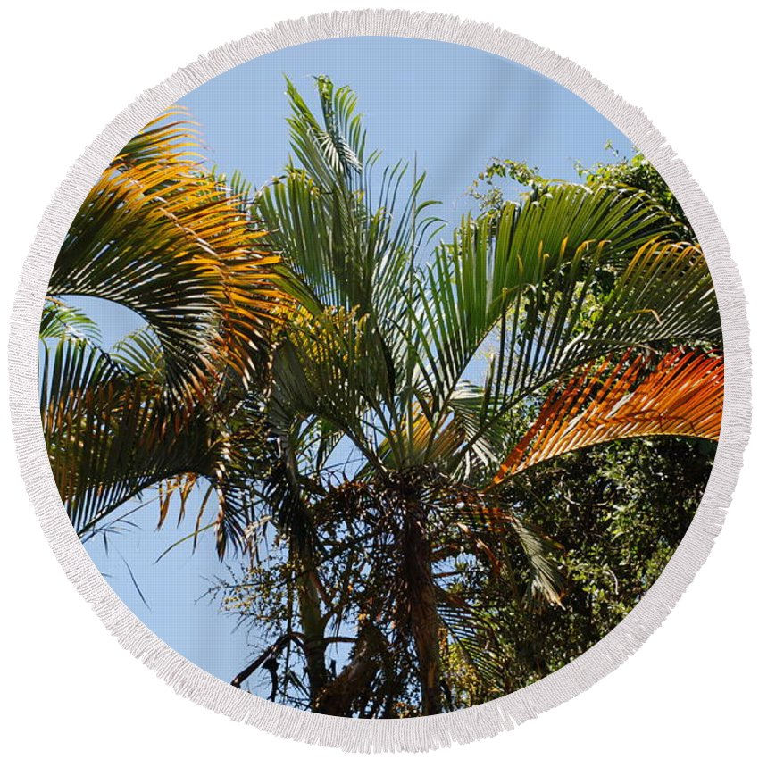 Palms Round Beach Towel featuring the photograph Orange Trees by Rob Hans