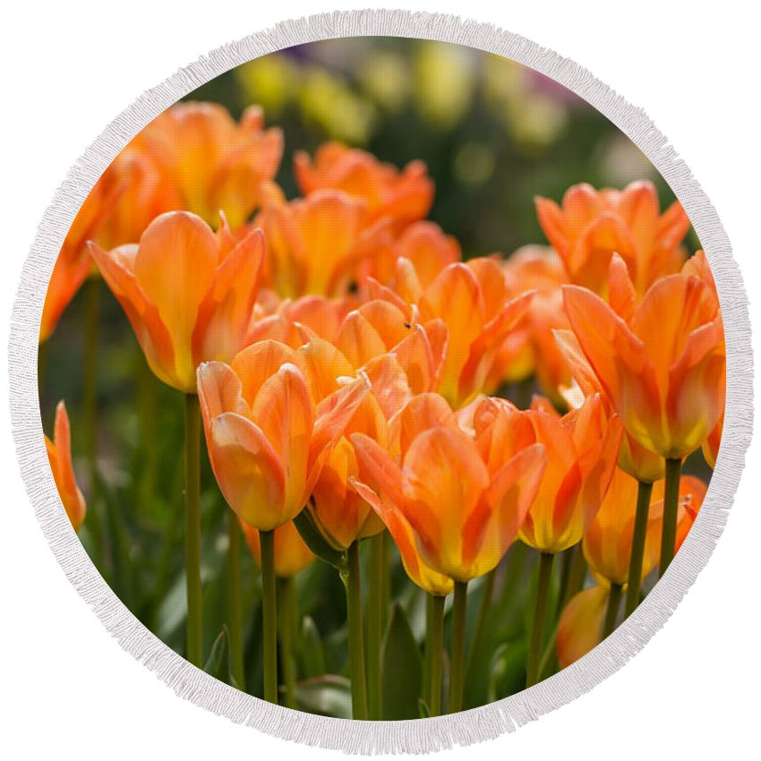 Colorado Round Beach Towel featuring the photograph Orange Tulips by Ashley M Conger