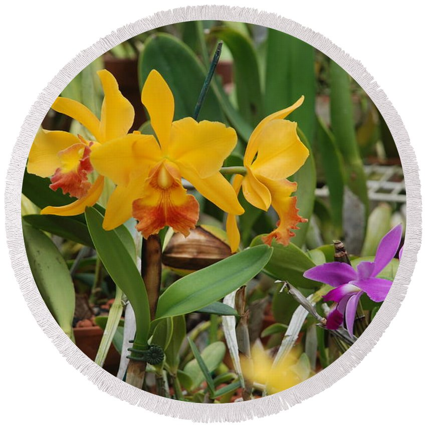 Orange Round Beach Towel featuring the photograph Orangepurple Orchids by Rob Hans
