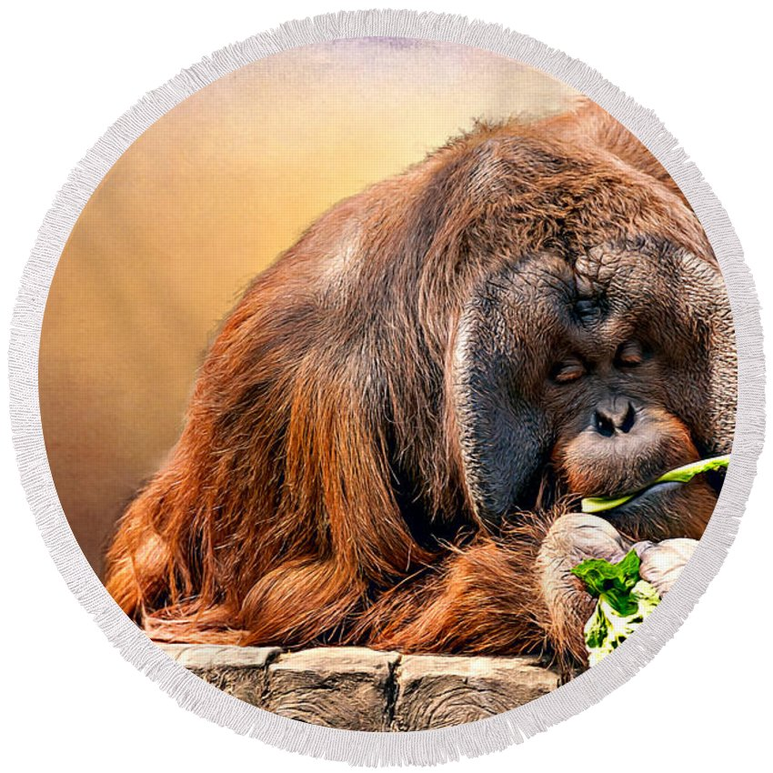 Animal Round Beach Towel featuring the photograph Orangutan by Maria Coulson
