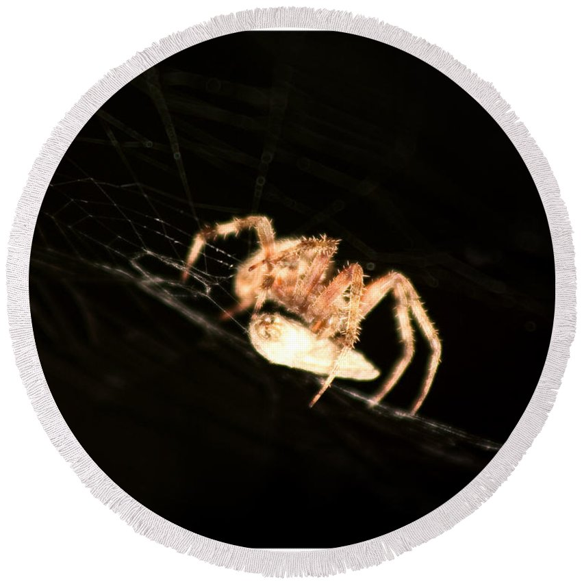 Spider Round Beach Towel featuring the photograph Orb Spider by Anthony Jones