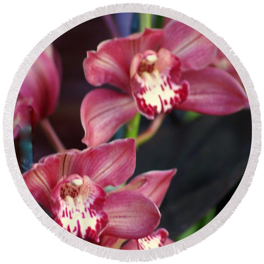 Flower Round Beach Towel featuring the photograph Orchid 14 by Marty Koch