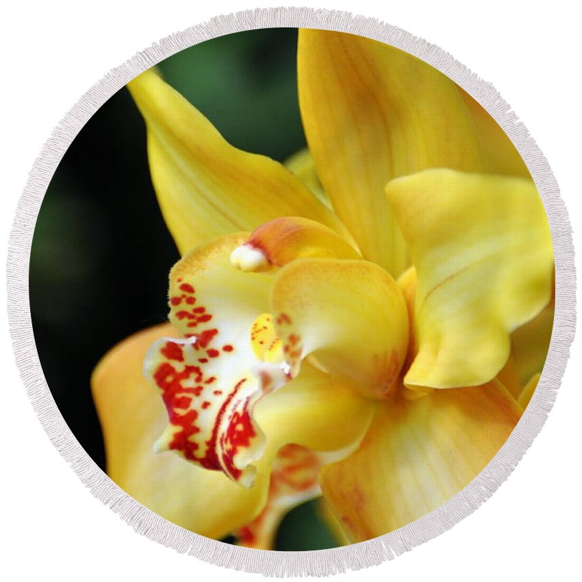 Orchid Round Beach Towel featuring the photograph Orchid 24 by Marty Koch