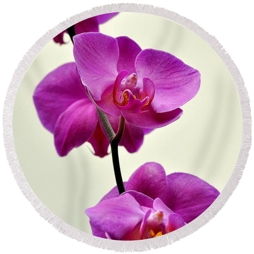 Orchid Round Beach Towel featuring the photograph Orchid 26 by Marty Koch