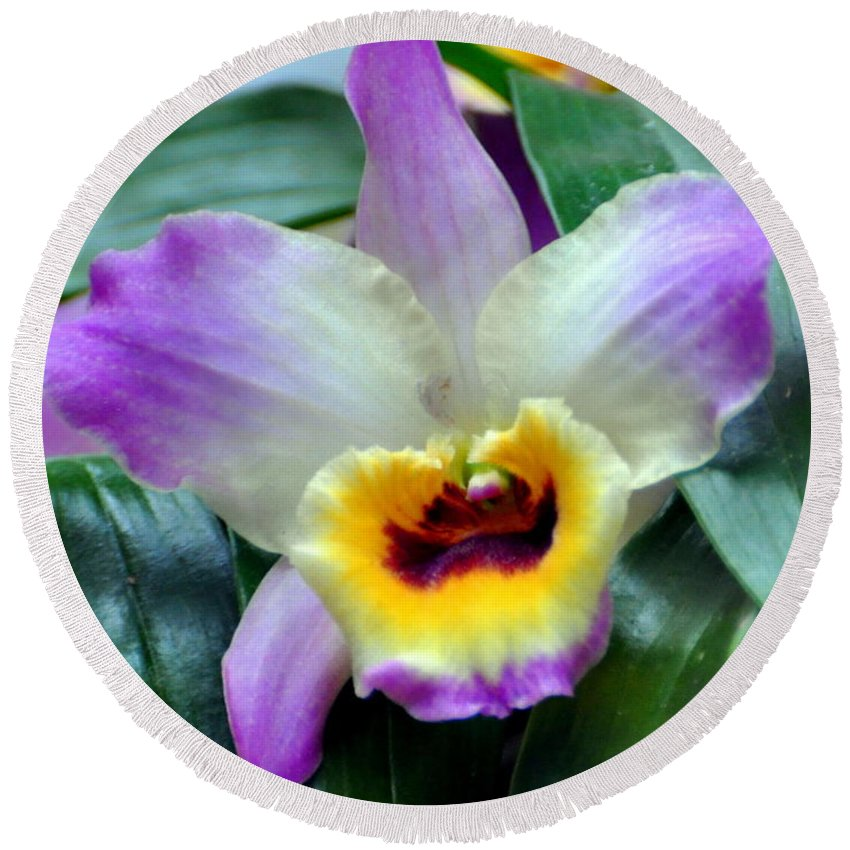 Orchid Round Beach Towel featuring the photograph Orchid 34 by Marty Koch