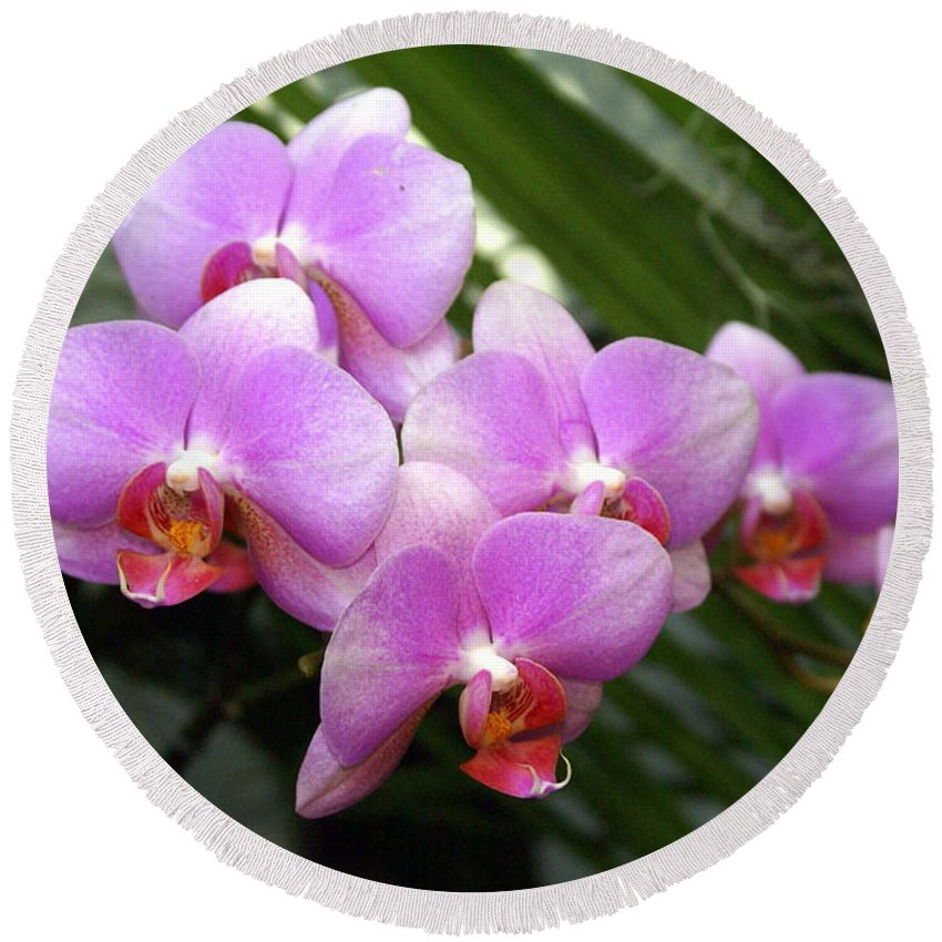 Flower Round Beach Towel featuring the photograph Orchid 4 by Marty Koch