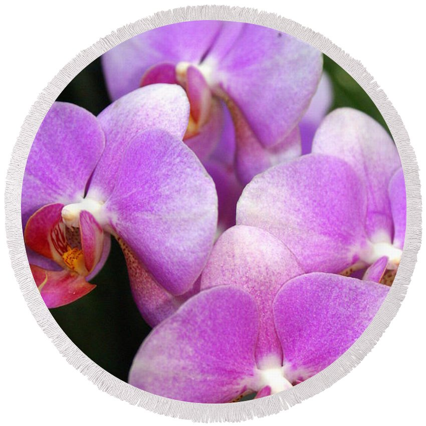 Flower Round Beach Towel featuring the photograph Orchid 5 by Marty Koch