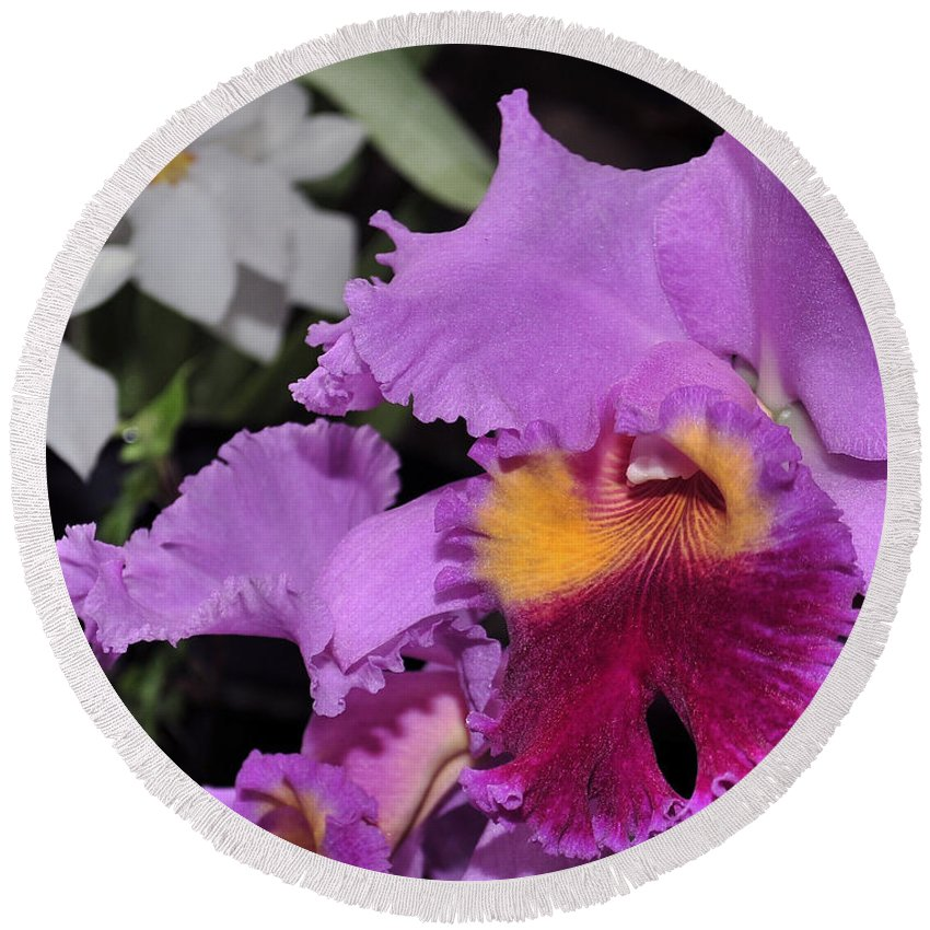 Orchid Round Beach Towel featuring the photograph orchid 942 Purple Brassolaeliocattleya by Terri Winkler