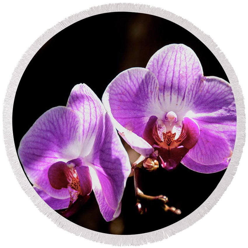 Portrait Round Beach Towel featuring the photograph Orchid At Fairchild Gardens by Stan Roban