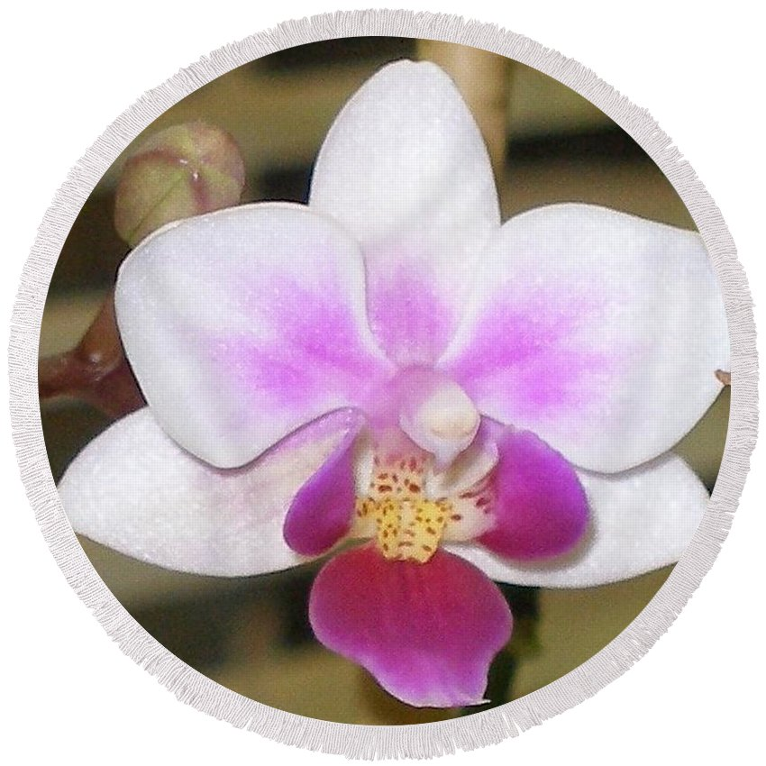 Purple Round Beach Towel featuring the photograph Orchid Explosion by Maria Bonnier-Perez