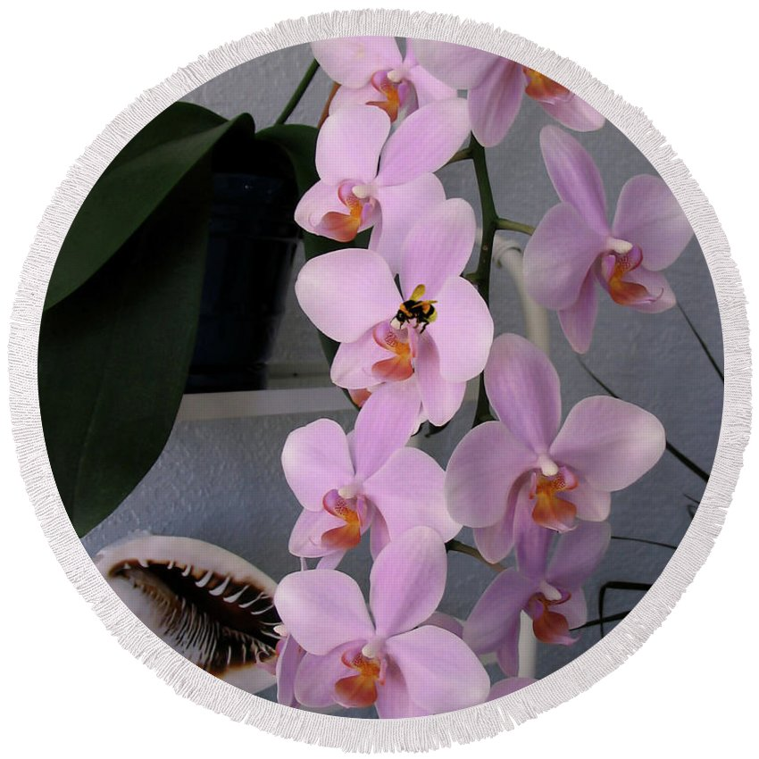 Orchid Round Beach Towel featuring the photograph Orchid Splendor by Adele Moscaritolo