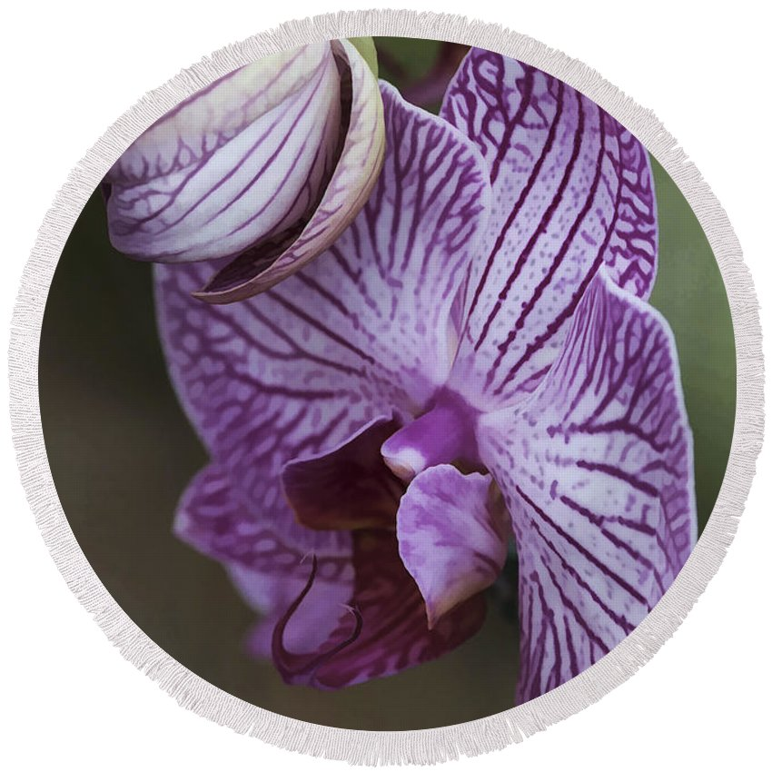 Flower Round Beach Towel featuring the photograph Orchid Strips by Deborah Benoit