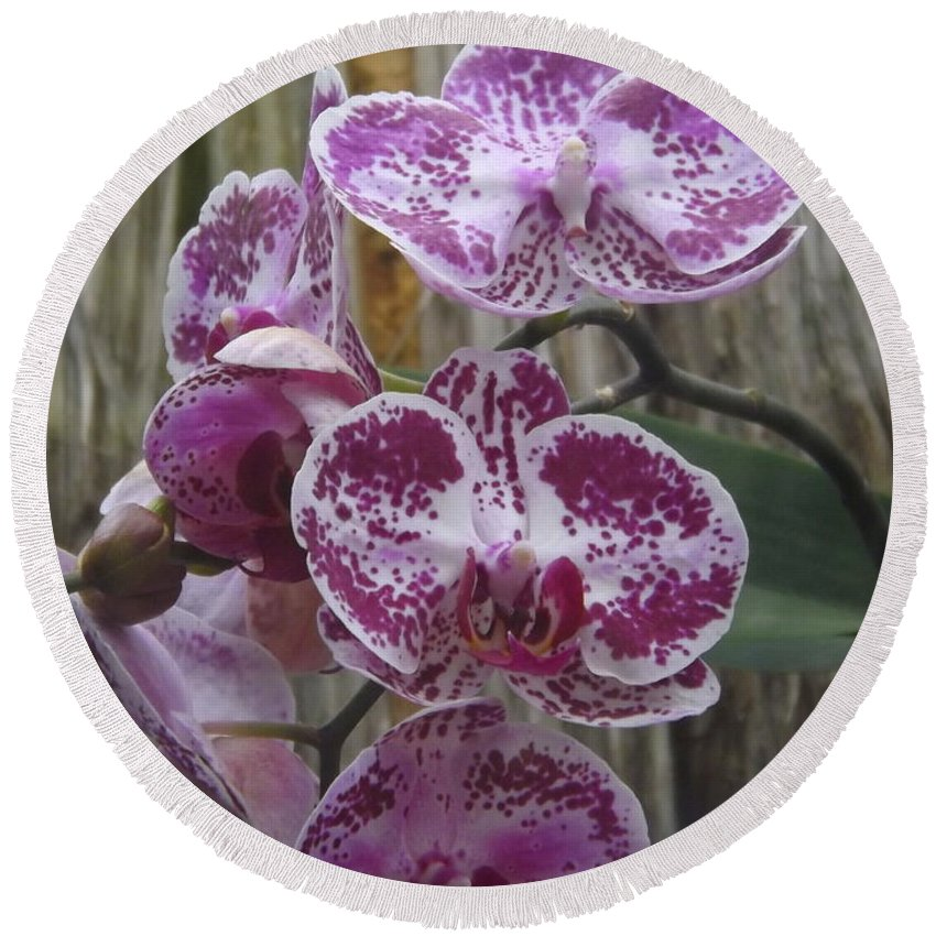 Flora Round Beach Towel featuring the photograph Orchid With Purple Patches by Lingfai Leung