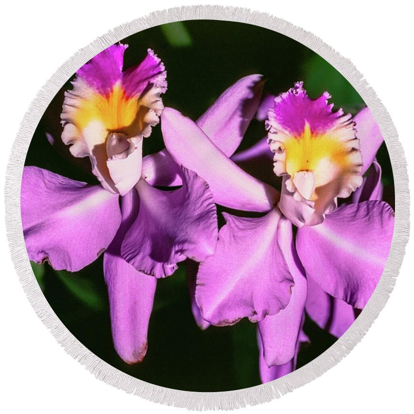 Abstract Round Beach Towel featuring the photograph Orchids In Costa Rica by Hans Schrodter