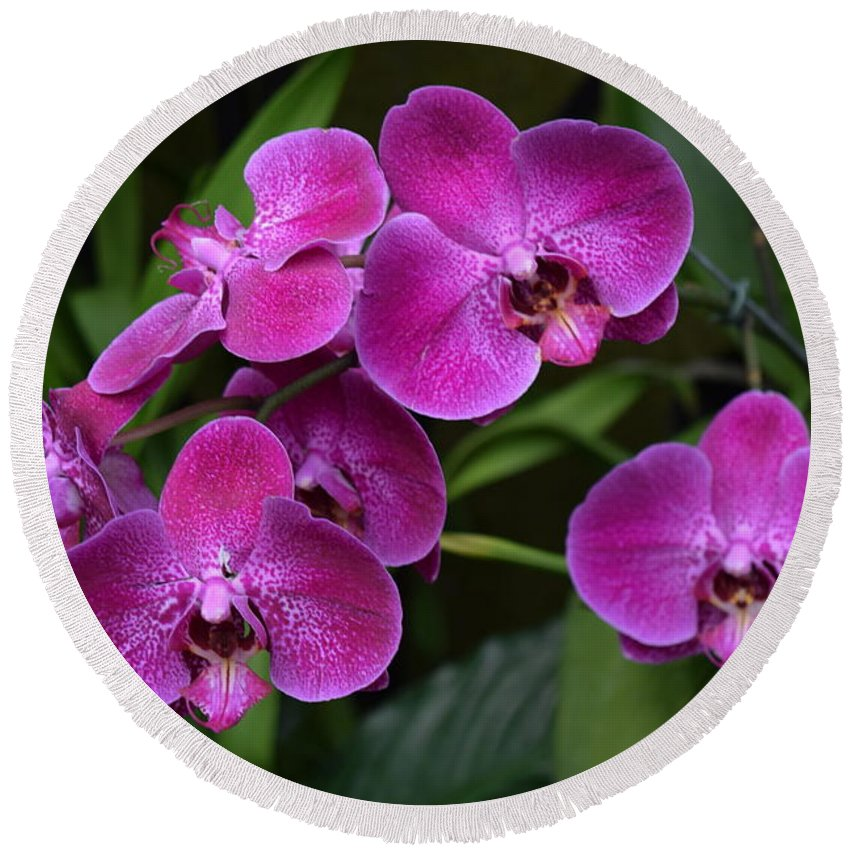Orchids Round Beach Towel featuring the photograph Orchids In Vivid Pink by Jeannie Rhode
