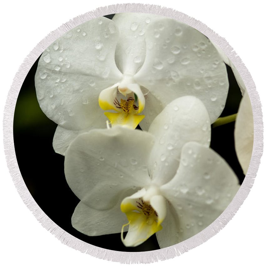 Orchids Kauai Round Beach Towel featuring the photograph Orchids Kauai by Yefim Bam