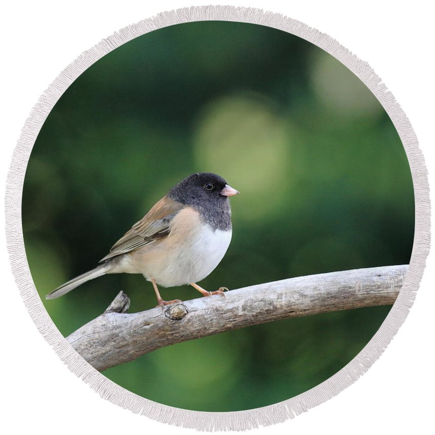 Wildlife Round Beach Towel featuring the photograph Oregon Junco by Wingsdomain Art and Photography