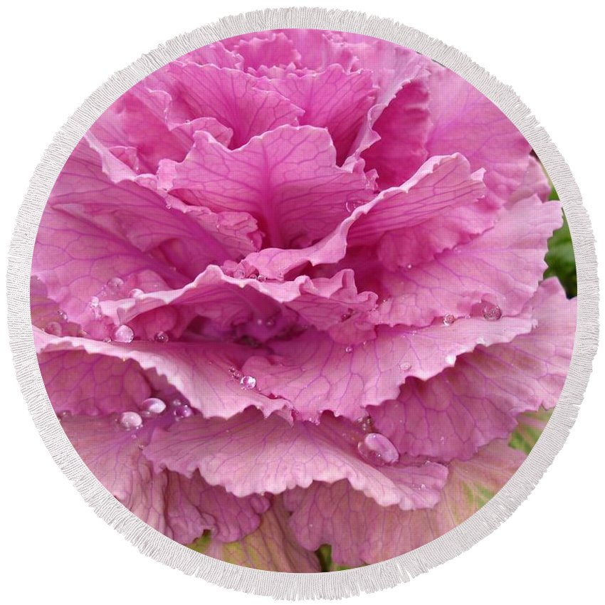 Ornamental Cabbage Round Beach Towel featuring the photograph Ornamental Cabbage by Carol Groenen