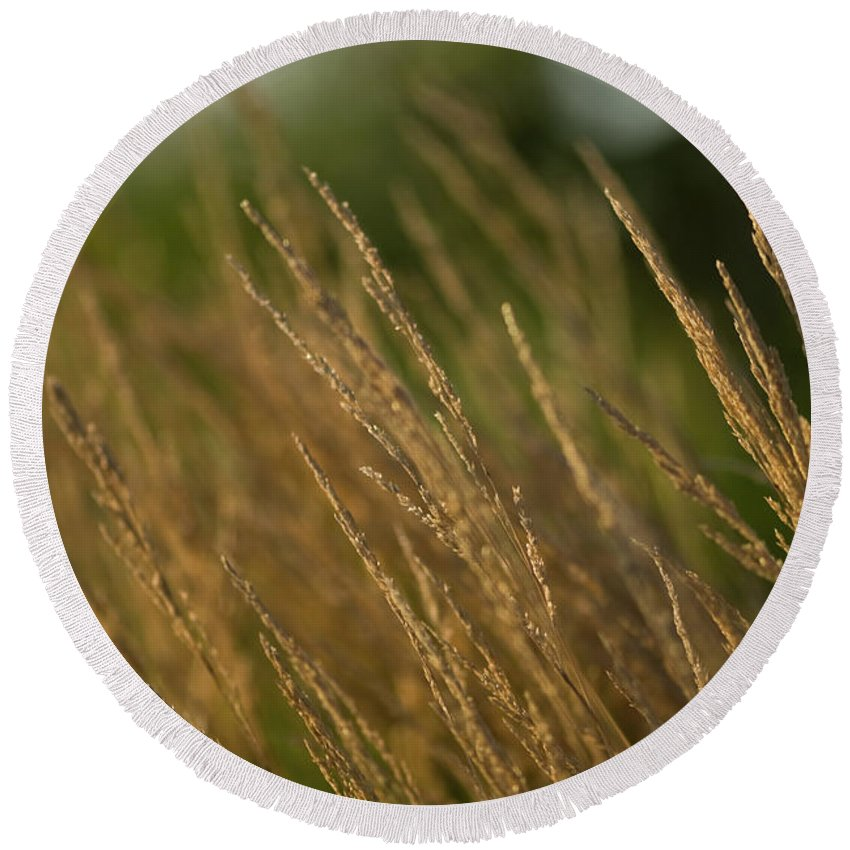 ornamental Grass Round Beach Towel featuring the photograph Ornamental Naturally by Paul Mangold