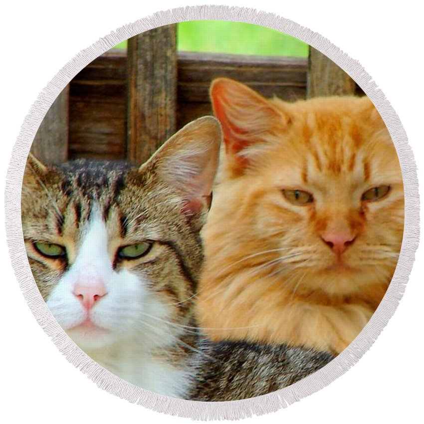 Cats Round Beach Towel featuring the photograph Oscar And Red by J R Seymour