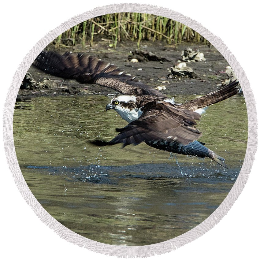 Osprey Round Beach Towel featuring the photograph Osprey Fish That Got Away by KenDidIt Photography