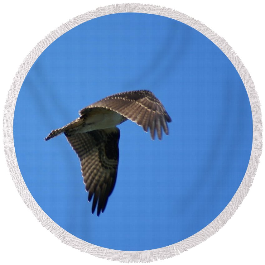Birds Round Beach Towel featuring the photograph Osprey In Flight 3 by Ben Upham III