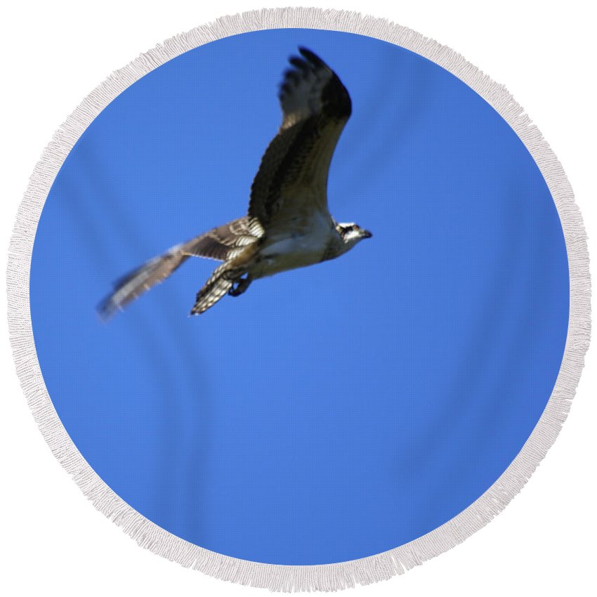 Birds Round Beach Towel featuring the photograph Osprey In Flight 4 by Ben Upham III