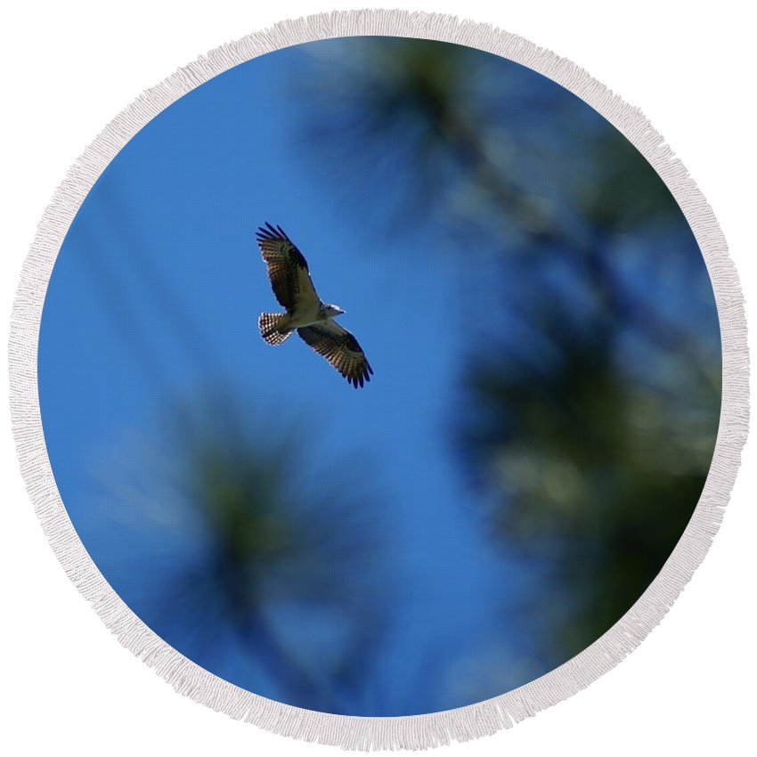 Birds Round Beach Towel featuring the photograph Osprey In Flight 8 by Ben Upham III