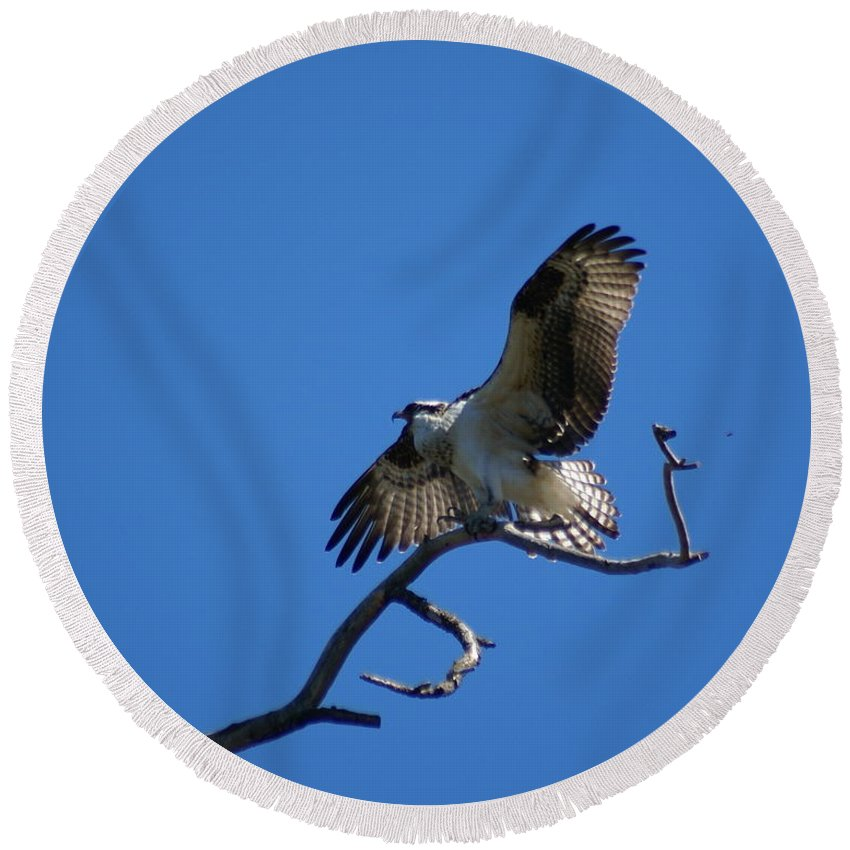 Birds Round Beach Towel featuring the photograph Osprey Landing by Ben Upham III