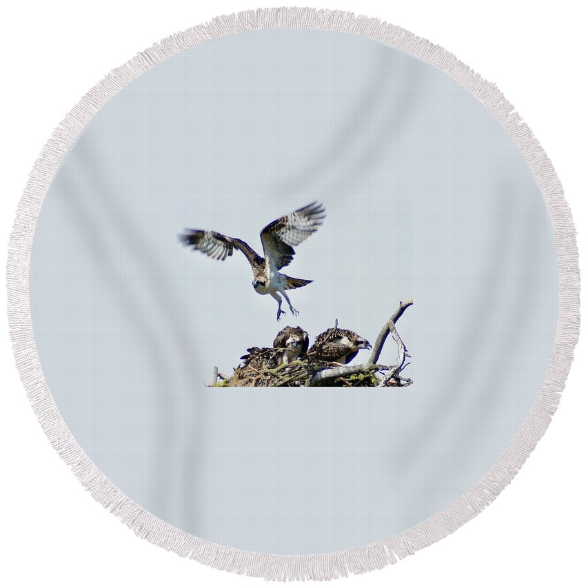 Spokane Round Beach Towel featuring the photograph Osprey Nest by Ben Upham III