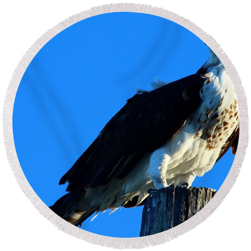 Osprey Round Beach Towel featuring the photograph Osprey On A Pole by Christiane Schulze Art And Photography