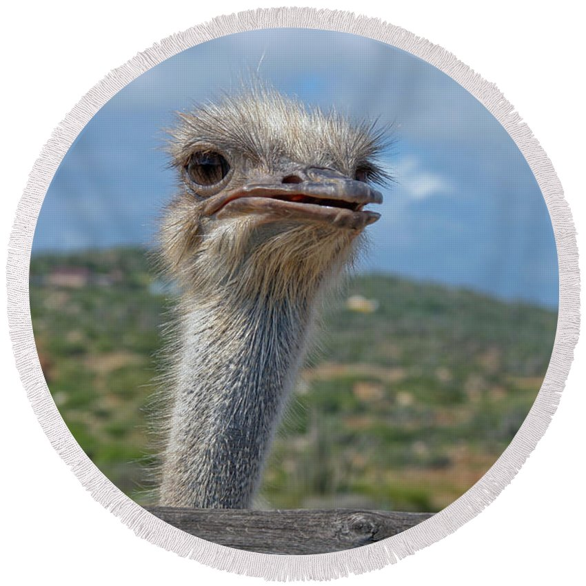Ostrich Round Beach Towel featuring the photograph Ostrich Head by Thomas Marchessault