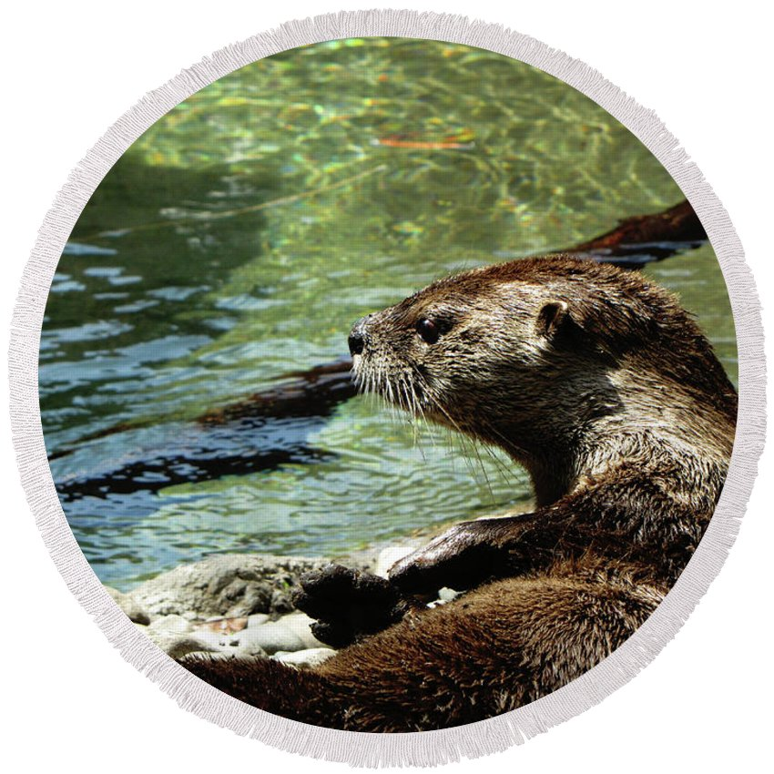 Otter Round Beach Towel featuring the photograph Otter by September Stone