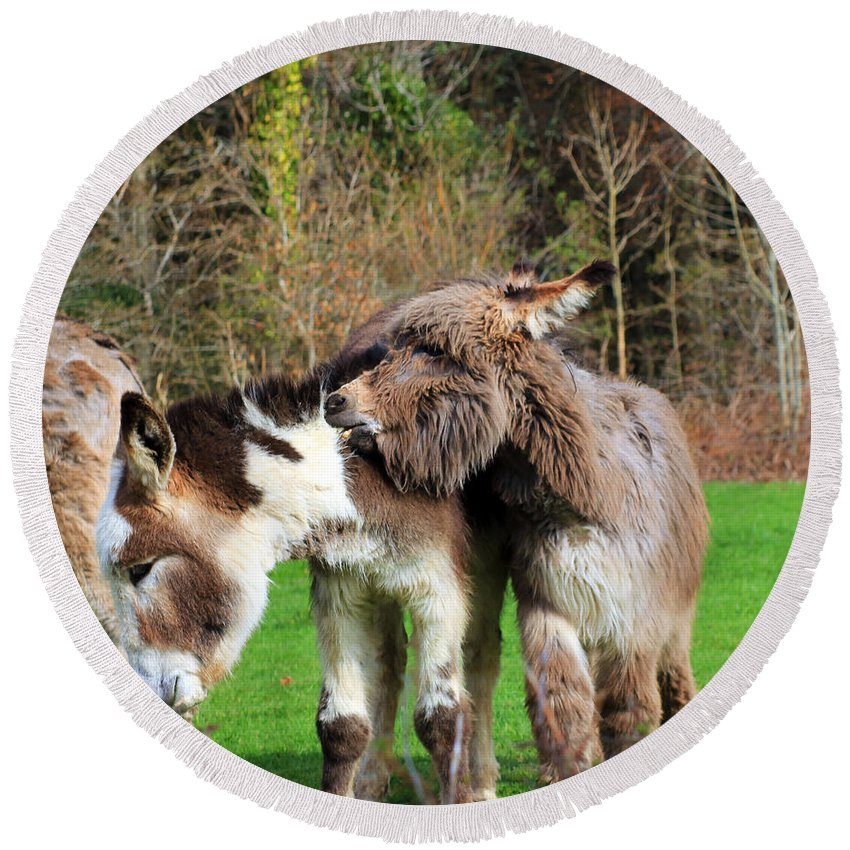 Biting Donkey Round Beach Towel featuring the photograph Ouch by Jennifer Robin
