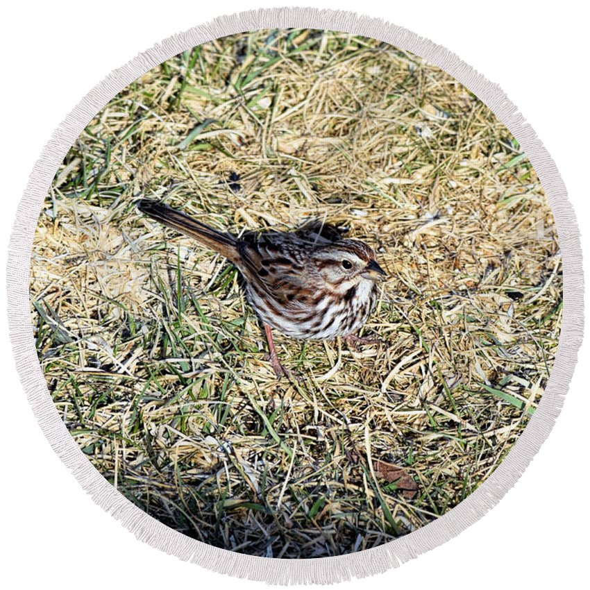Sparrow Round Beach Towel featuring the photograph Out Of The Shadows by William Tasker