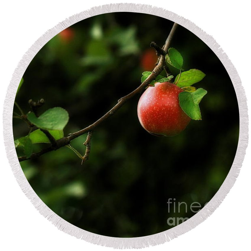 Adam And Eve Round Beach Towel featuring the photograph Out On A Limb A Tempting Photograph Of A Tasty Ripe Red Apple On A Tree by Angela Rath