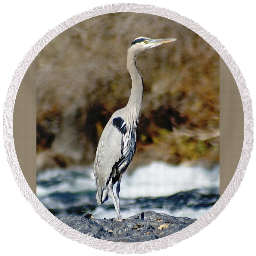 Birds Round Beach Towel featuring the photograph Outstanding On His Rock by Ben Upham III
