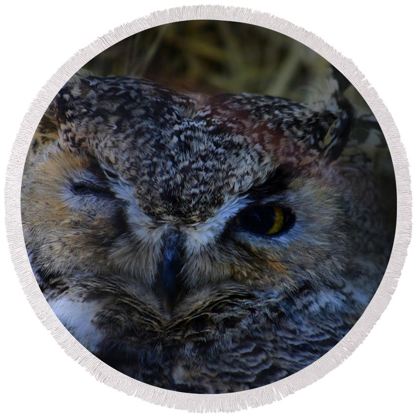 Owl Round Beach Towel featuring the photograph Owl by Anthony Jones