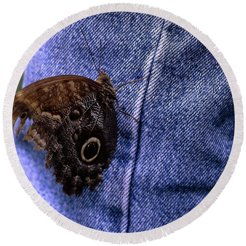 Owl Butterfly On Jeans Round Beach Towel featuring the photograph Owl Butterfly On Jeans by Sally Weigand
