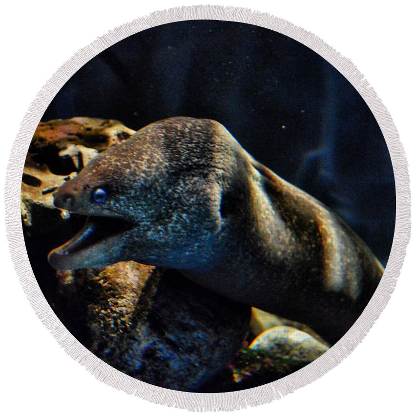 Eel Round Beach Towel featuring the photograph Pacific Moray Eel by Tommy Anderson