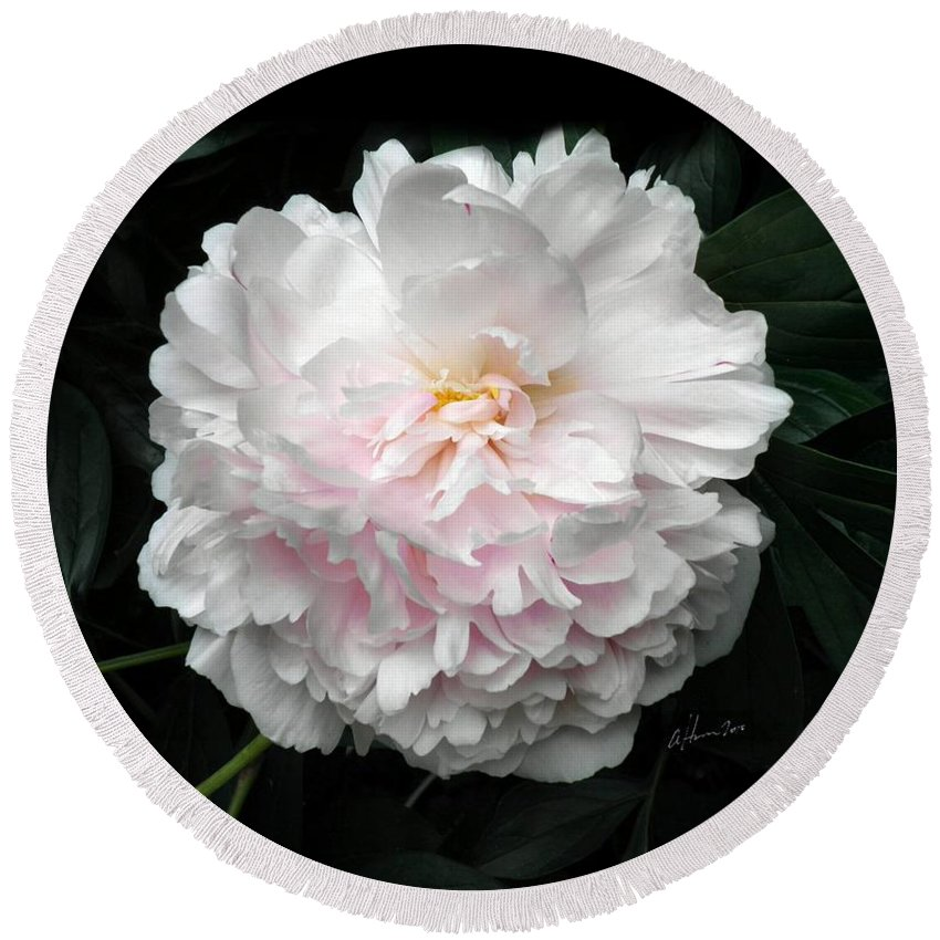 Peony Round Beach Towel featuring the photograph Paeon by T Cook